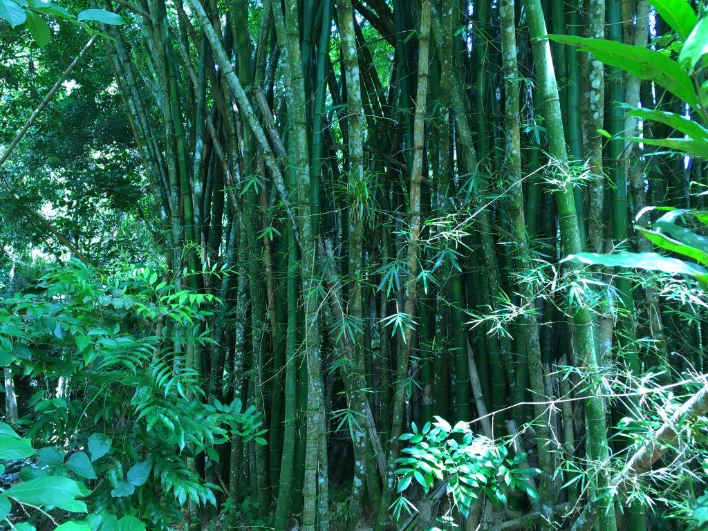 bamboo el nicho cuba