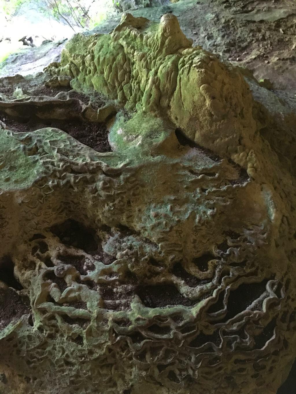 caves el nicho