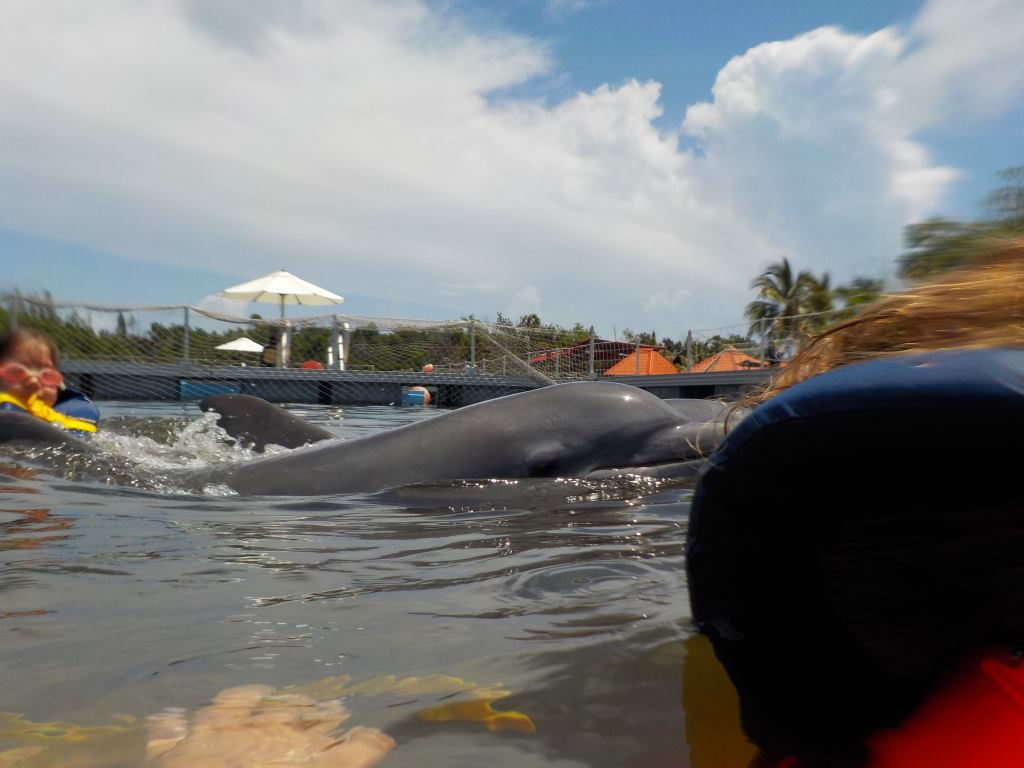 swim dolphin