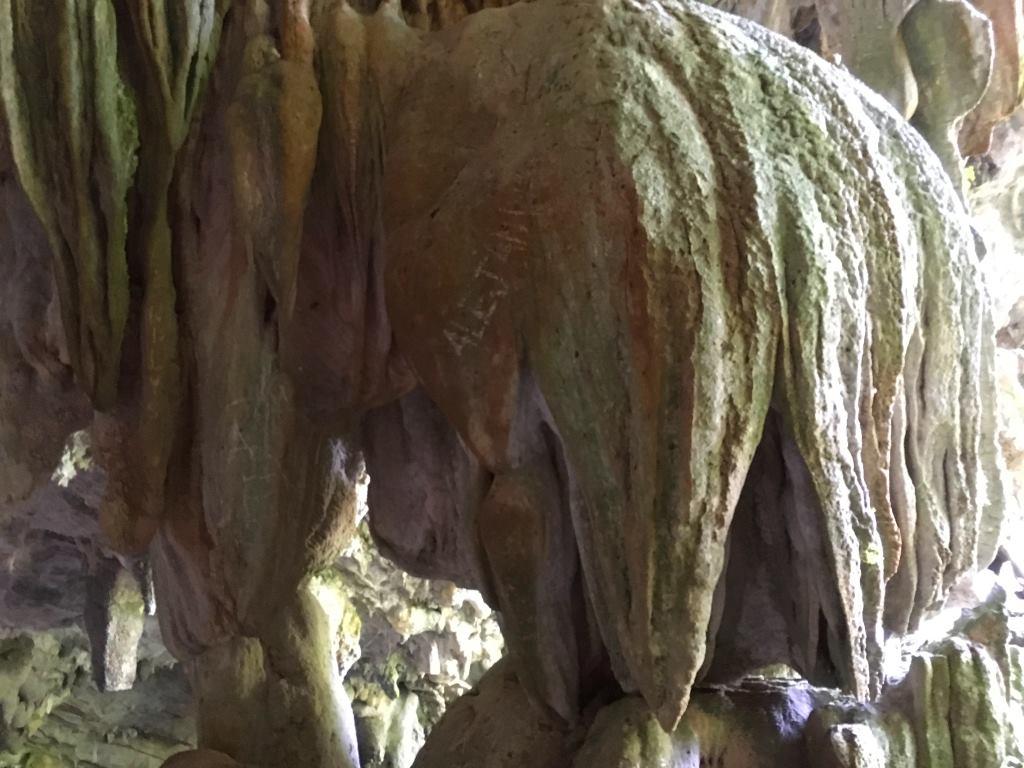 elephant el nicho