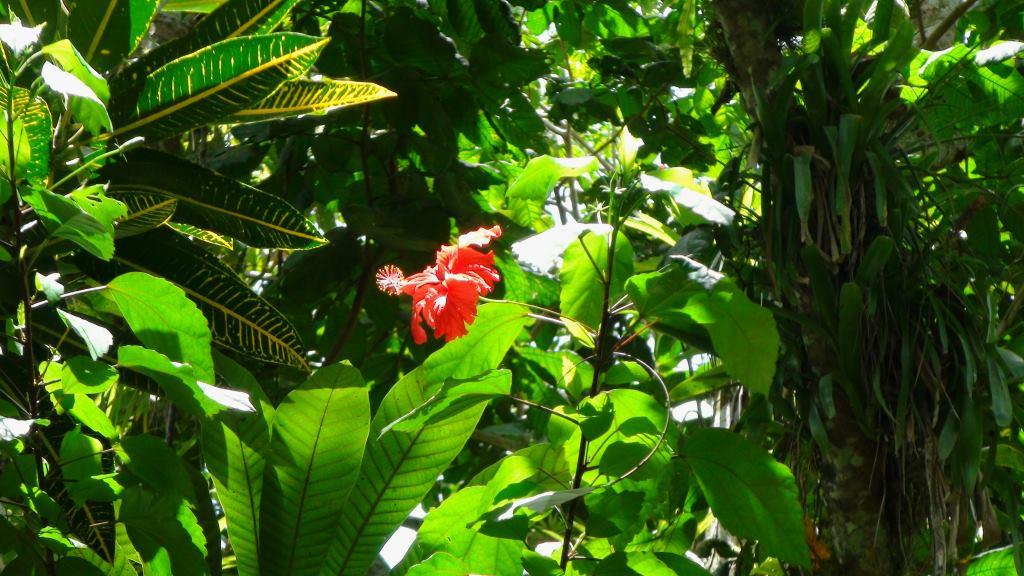 plants cuba