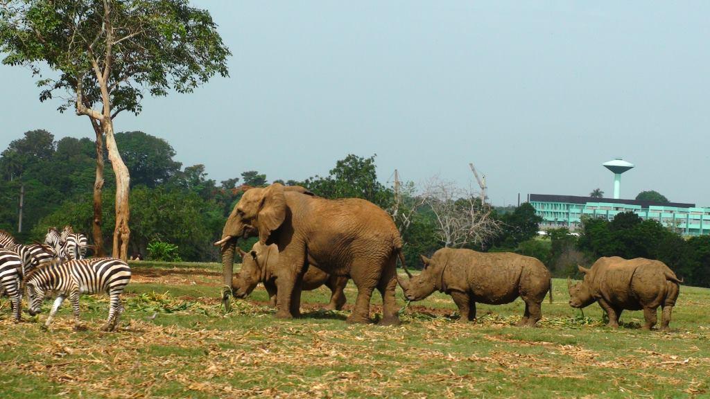 havana zoo bus safari