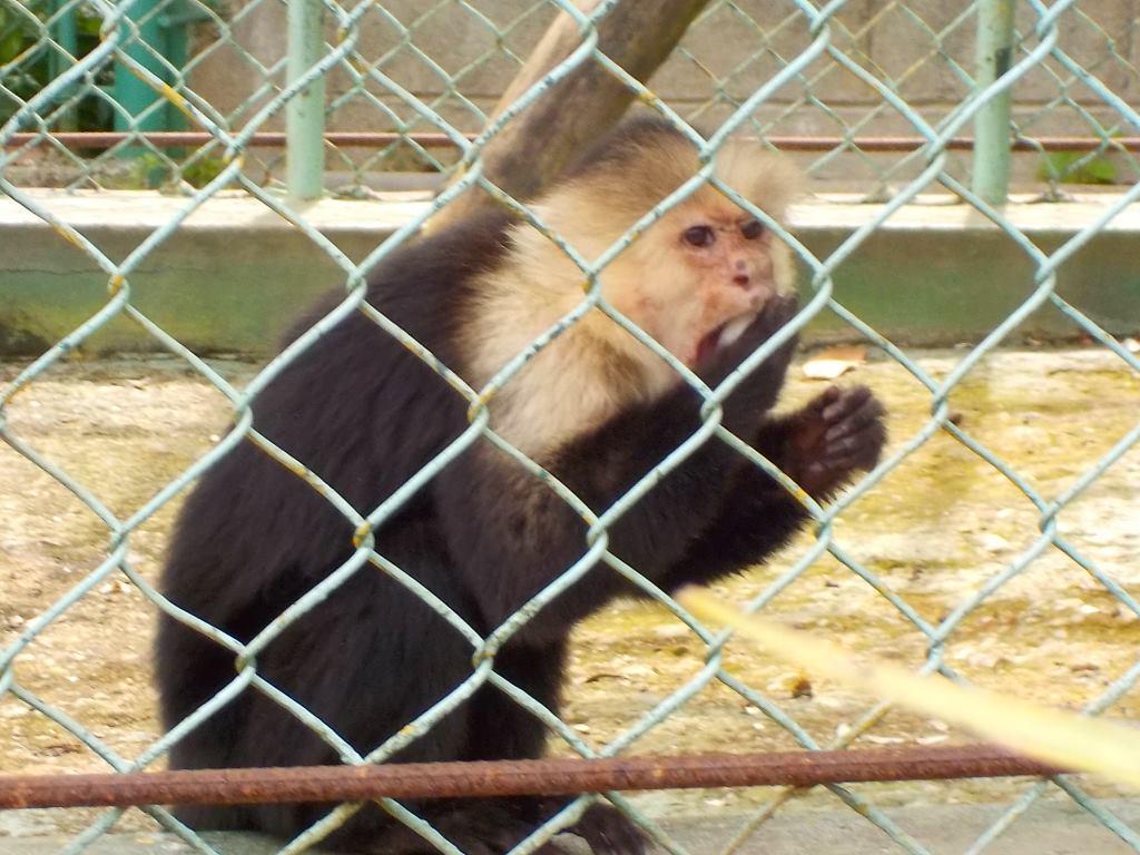 havana monkey zoo