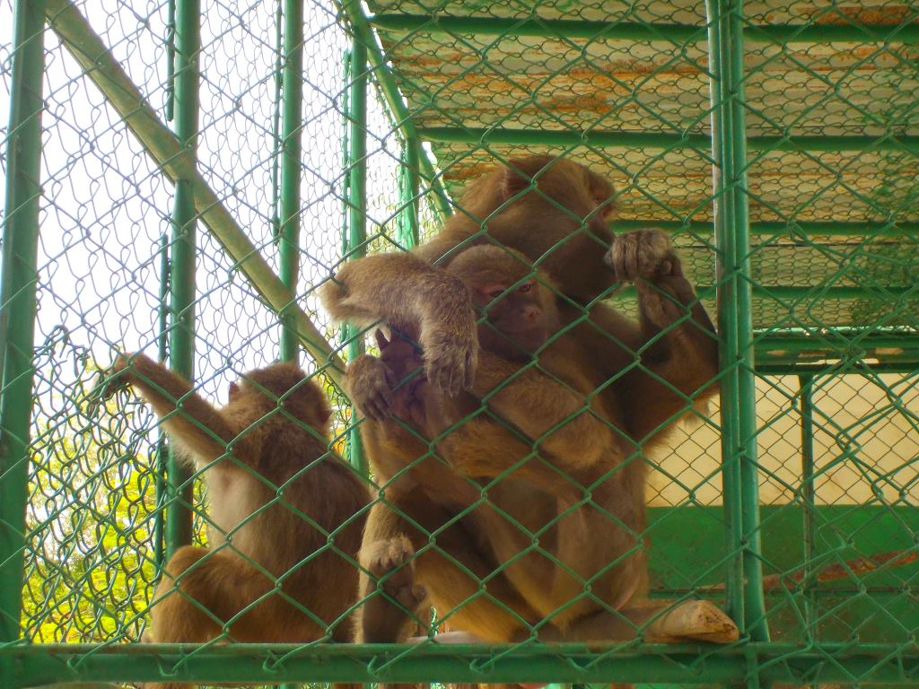 monkeys zoo havana cuba