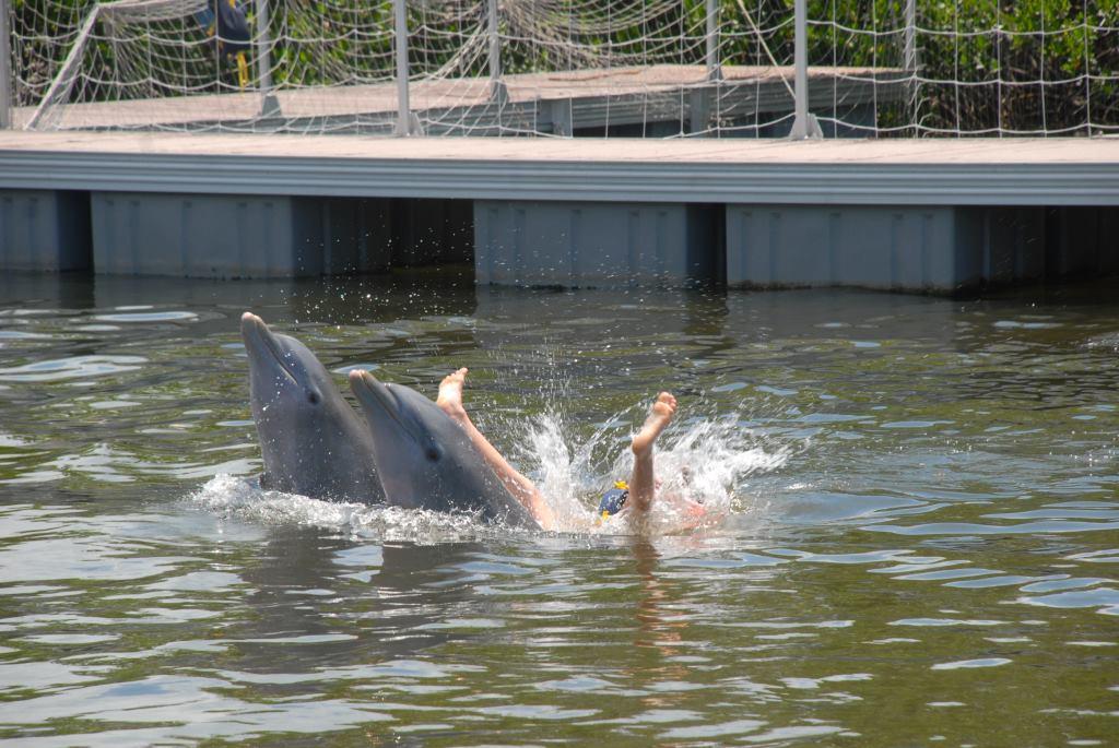 dolphins varadero