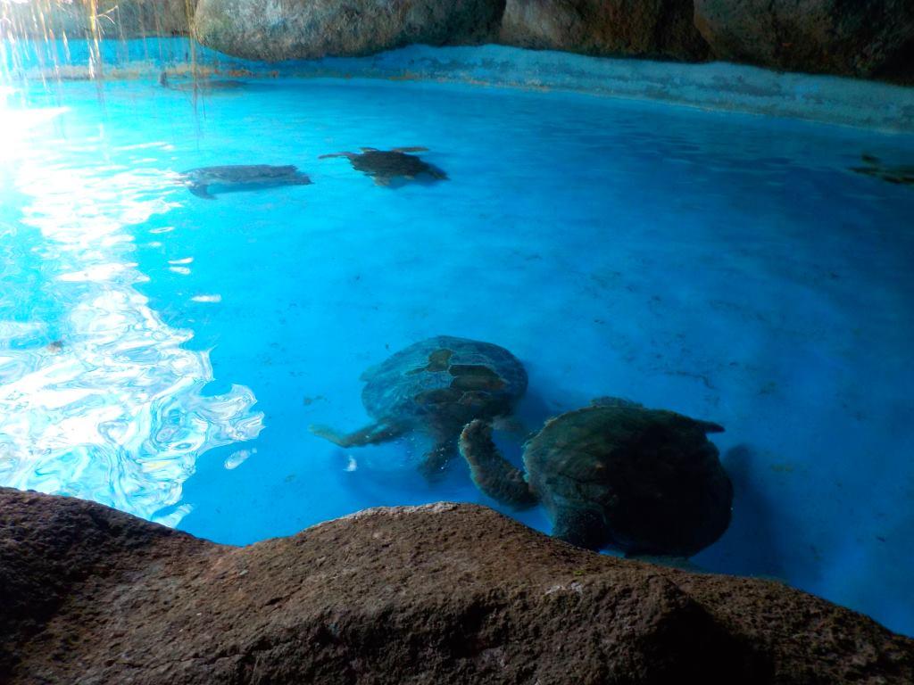 turtles ahavana