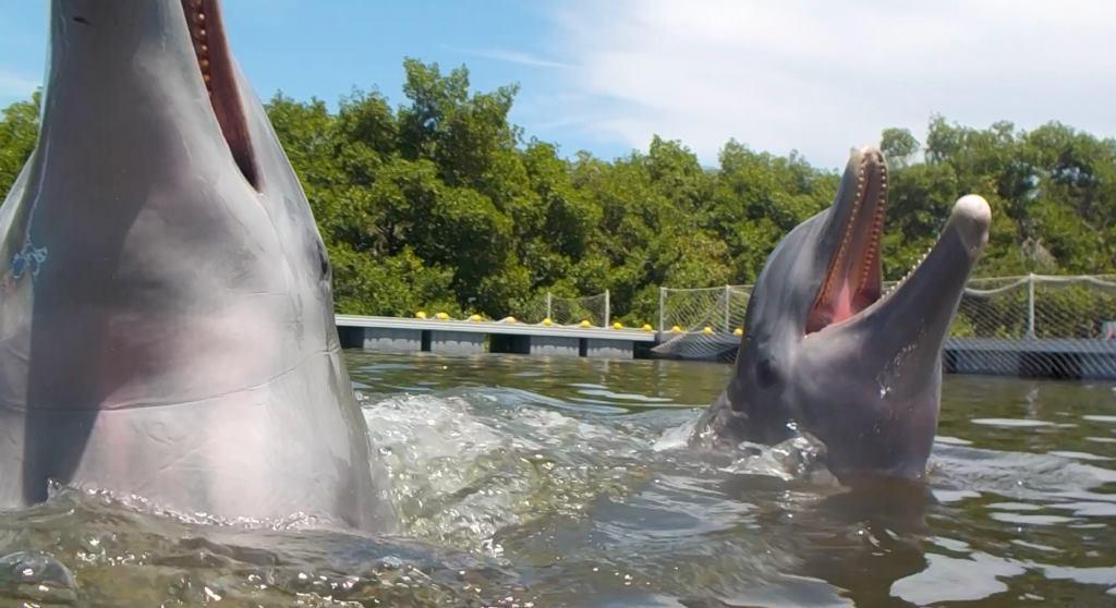 dolphinarium varadero cuba